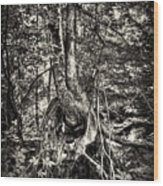 Intwined Wood Print
