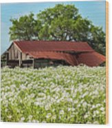 Poppy Invasion In Hillcountry-texas Wood Print