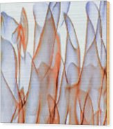Inverted Reflection Abstract 350 Wood Print