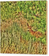 Invisible Nature One Surreal C Wood Print