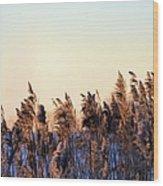 Iowa Cane Wood Print
