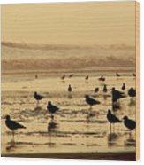 Iquique Chile Seagulls  Wood Print