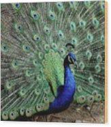 Iridescent Blue-green Peacock Wood Print