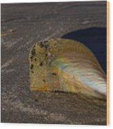 Iridescent Pen Shell  Wood Print
