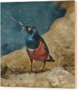 Iridescent Starling Wood Print