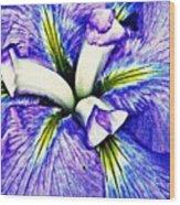 Iris 12 Wood Print