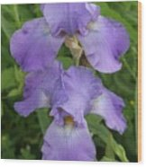 Iris After Rain Wood Print