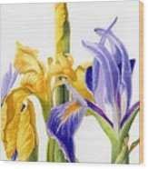Iris And Flag Wood Print