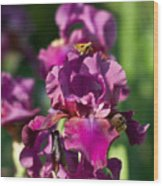 Iris And Moth Wood Print
