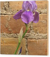 Iris And The Wall Wood Print