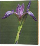 Iris At The Manor Wood Print