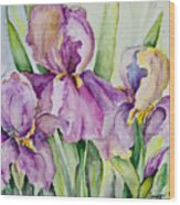 Iris Beauties Wood Print