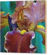 Iris Beauty Photograph Wood Print