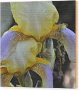 Iris Beauty Wood Print