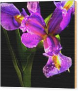 Iris Bloom Two Wood Print