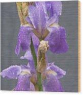 Iris Blooms In The Rain Wood Print
