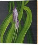 Iris Buds  49 Wood Print