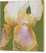 Iris Canary Frills Wood Print