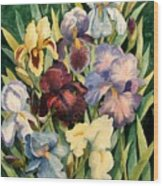 Iris Collection Wood Print