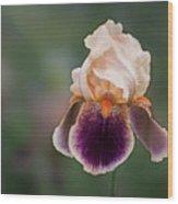 Iris Curls Wood Print