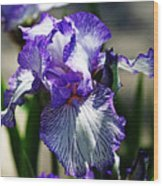 Iris Dressed For Royalty Wood Print