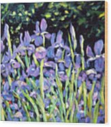 Iris En Folie Wood Print