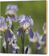 Iris Feild Wood Print