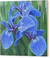 Iris Floral  Wood Print