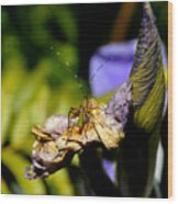 Iris Flower And Visitor Wood Print