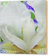 Iris Flower Art Print White Blue Purple Irises Baslee Troutman Wood Print