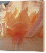 Iris Flower Art Prints Sunlit Orange Irises Baslee Troutman Wood Print