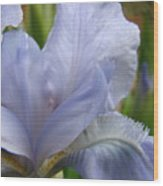 Iris Flower Blue 2 Irises Botanical Garden Art Prints Baslee Troutman Wood Print