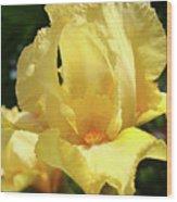 Iris Flower Floral Art Prints Orange Irises Wood Print