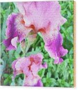 Iris Flower Photograph I Wood Print