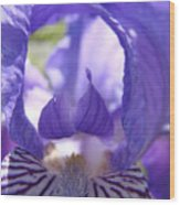 Iris Flower Purple Irises Floral Botanical Art Prints Macro Close Up Wood Print