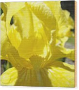 Iris Flower Yellow Macro Close Up Irises 30 Sunlit Iris Art Print Baslee Troutman Wood Print