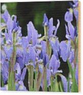 Iris Flowers Art Print Blue Purple Irises Spring Rain Wood Print