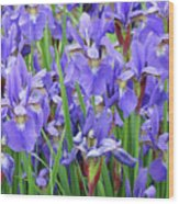 Iris Flowers Artwork Purple Irises 9 Botanical Garden Floral Art Baslee Troutman Wood Print