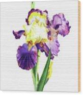 Iris Flowers Watercolor  Wood Print