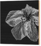 Iris In Black And White Wood Print