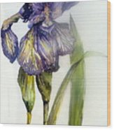 Iris In Bloom Wood Print