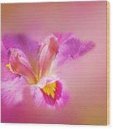 Iris In Mist Wood Print