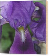 Iris In The Mist Wood Print