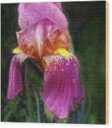Iris In The Pink Wood Print