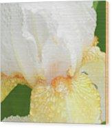 Iris In The Rain II Wood Print