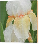 Iris In The Rain Wood Print