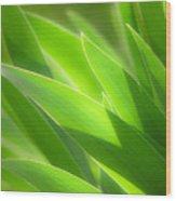 Iris Leaves Wood Print
