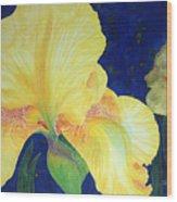Iris Miami Beach Wood Print