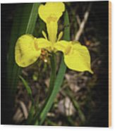 Iris Of The Marshes - 1 Wood Print