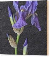 Iris On Black Leather Wood Print